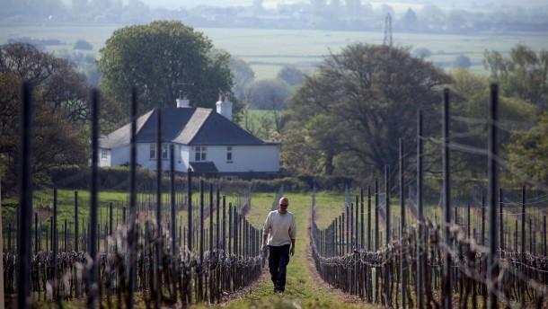 Die englische Weinrevolution!